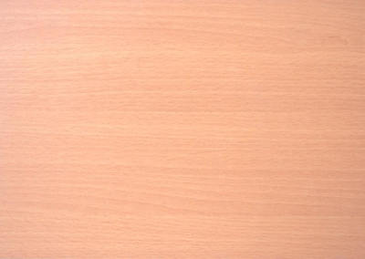 吉安特系列 – 山毛櫸 |GT30515